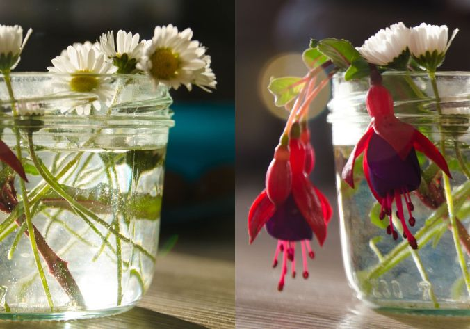 gaensebluemchenimglas-collageb
